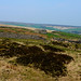 Small photo of Moor