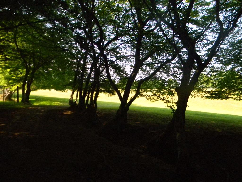 Trees Wadhurst Circular