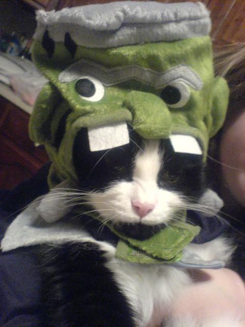 Franken-Kitty