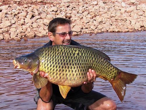 Morocco Carp 50.6 lbs - 23kg - Save a 50