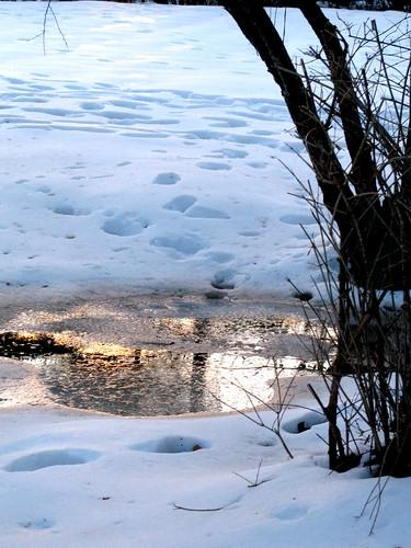 sunset snow reflection tree ice puddle