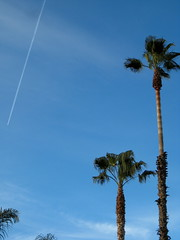 jet stream and palms