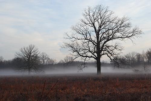 mist fog sunrise landscape nj nationalwildliferefuge nwr greatswamp greatswampnwr