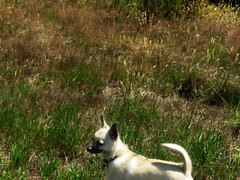 Sniff in Long Grass