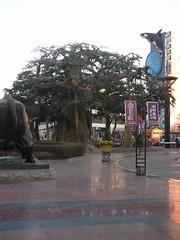 Big Tree @ Bu Xing Jie