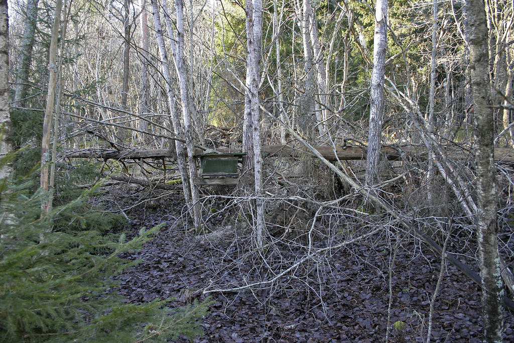 The Forest Feeding Station #1