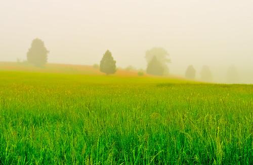 statepark park morning trees mist green field grass weather fog clouds virginia foggy wideangle tokina1224 manassas battlefield stateparks d300 manassasbattlefield blueribbonwinner wideanglephotography mywinners abigfave