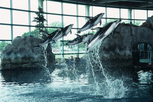 Shedd Aquarium - Dolphin Show - All Access Pass Included With the Go ...