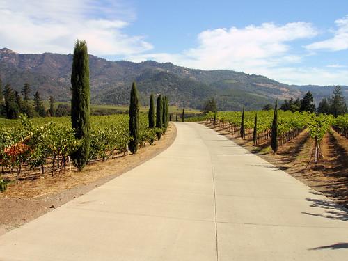 winery vineyards grapes napavalley napa castello amorosa castellodiamorosa