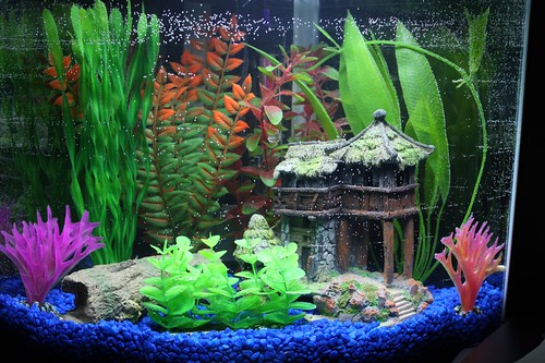 My New Fish Tank