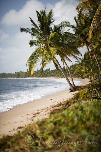 ocean africa vacation beach vertical swim relax tanzania sand waves place indianocean style palmtree eastafrica pangani eac beachtown easternafrica subsaharanafrica darkcontinent unitedrepublicoftanzania tangaregion eastafricancommunity tanzaniancoast