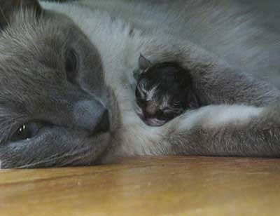 mom and baby cat snuggling
