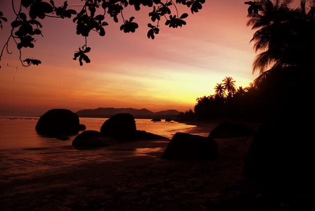thai nature (Koh Samui island)