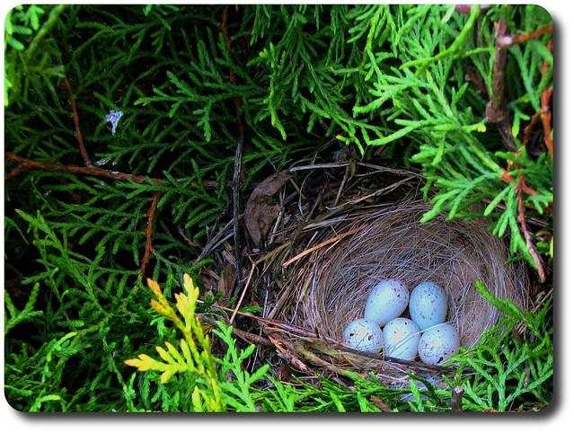 Bird's Nest - Ptasie Gniazdo from Flickr via Wylio