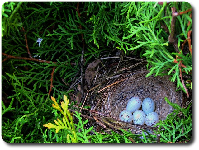 Picture Large Nest For Parents And Kids