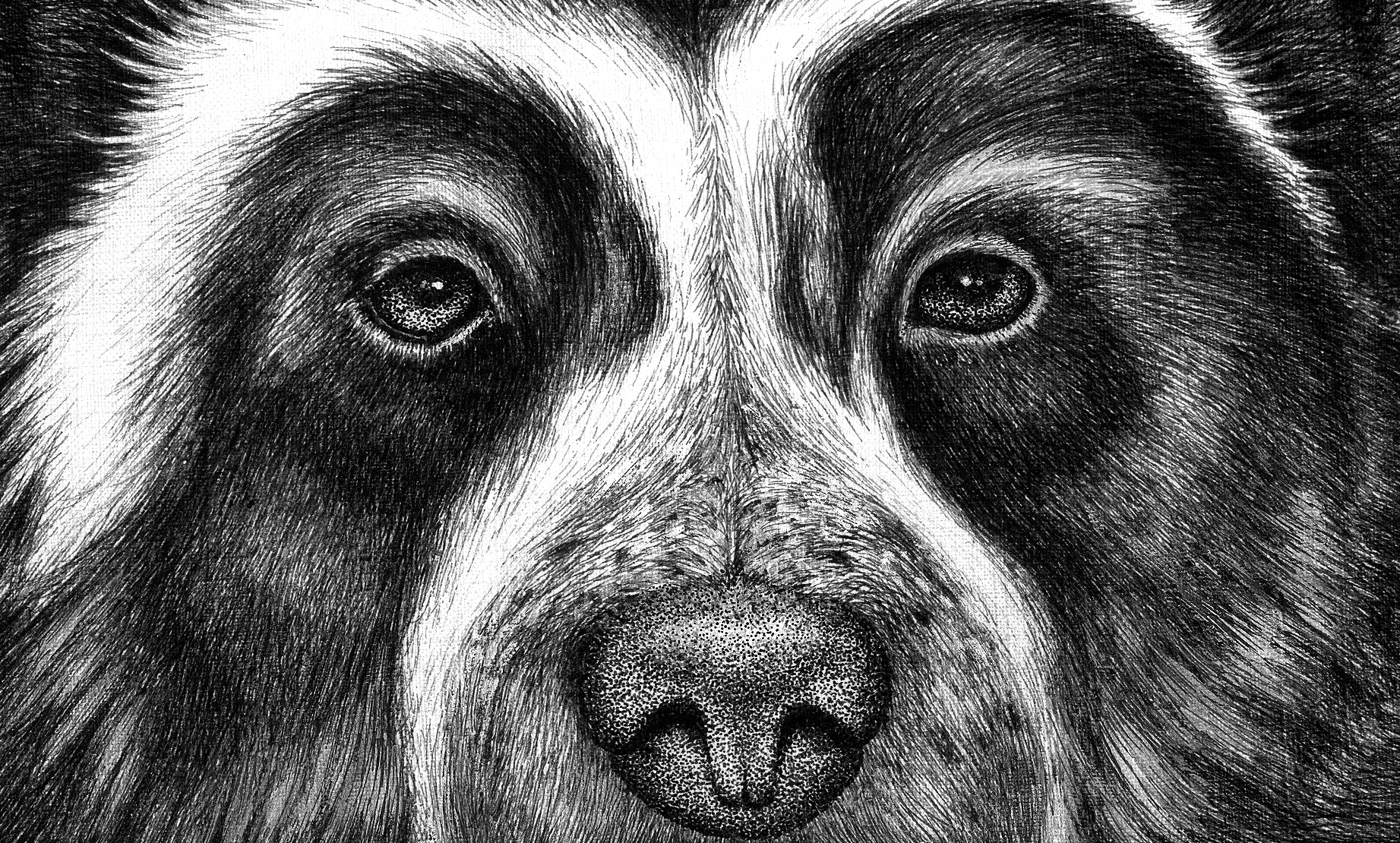 Black Bear Face Drawing Bear Face Drawing