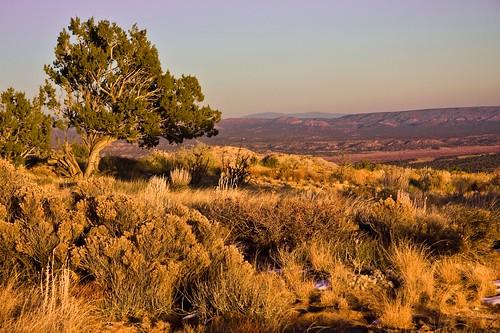 sunset sky newmexico tree landscape desert ojito ojitowilderness