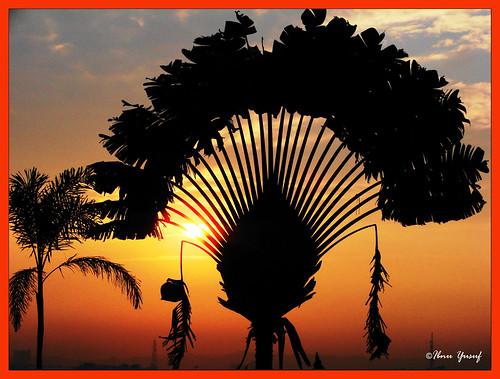 morning sun silhouette sunrise explore malaysia selangor shahalam h5 naturesfinest blueribbonwinner travelerspalm abigfave platinumphoto anawesomeshot superbmasterpiece ibnuyusuf betterthangood theperfectphotographer naturessilhouette atardeceryamanercer kelabshahalam