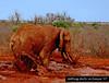 Getting dirty in Kenya '07