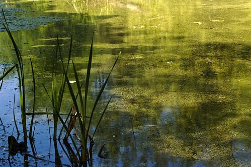 blue green nature water reeds landscape nikon swamp wetland d40 d40x