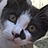 the ♥ ♥ ♥ Cats ♥ ♥ ♥ group icon