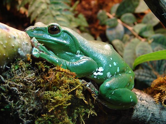 Baltimore Aquarium Frog Flickr - Photo Sharing!