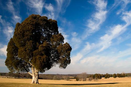 blue winter sky cold tree grass yellow clouds canon landscape golden civilwar manassas dcist battlefield manassasnationalbattlefieldpark eos30d battleofbullrun firstmanassas secondmanassas tklancer