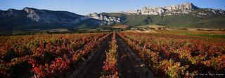 Rioja Alavesa.