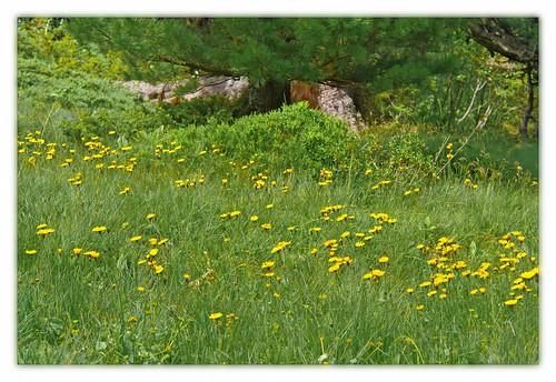 alps österreich green austria meadow alpen hohetauern bösenstein scheibelsee edelrautehütte