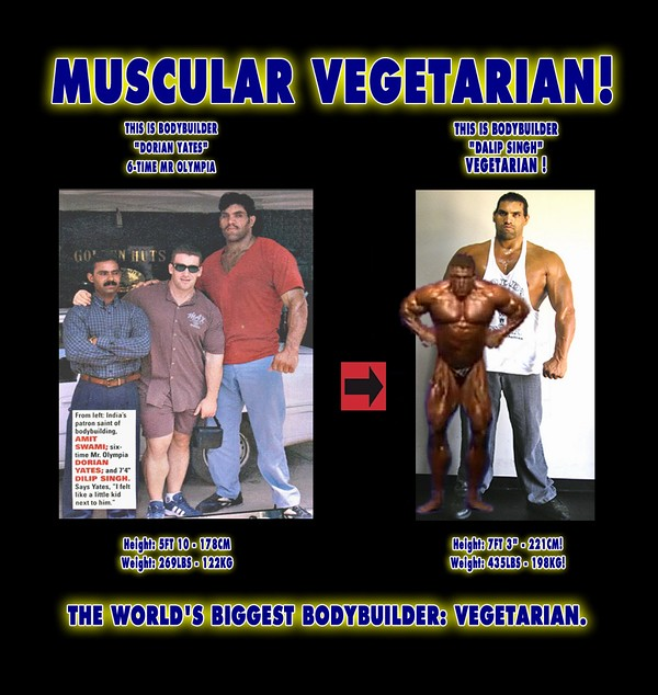 Image Result For Muscle Building Programs