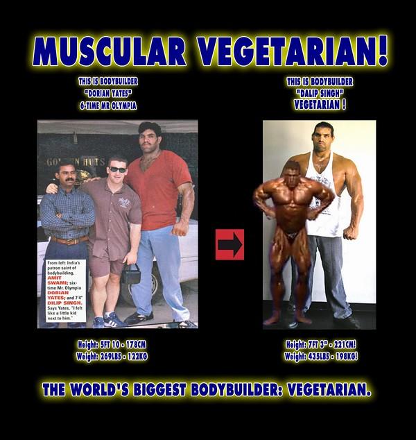 Muscle Building Protien Diets