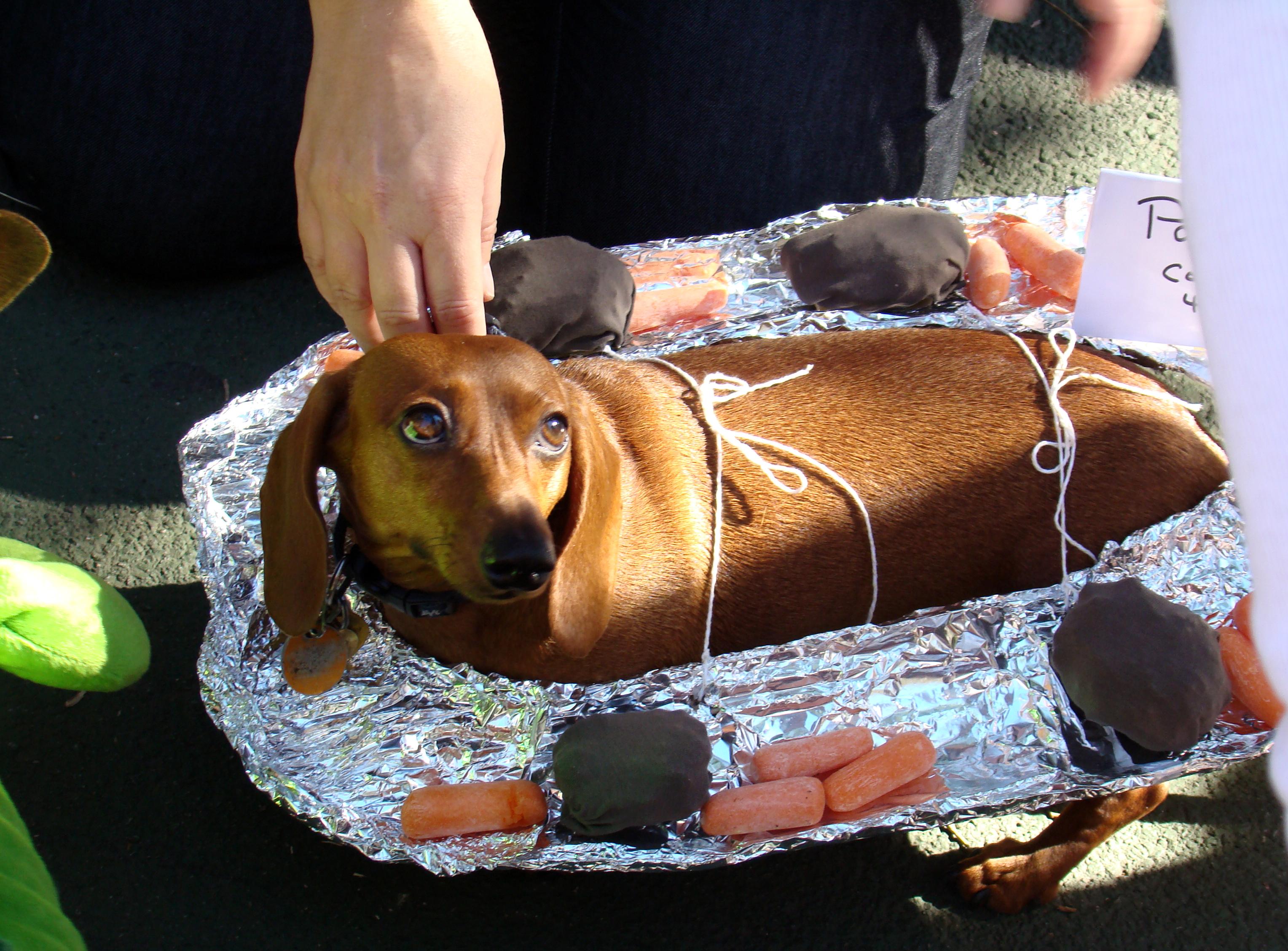Image Result For Dog Wiener