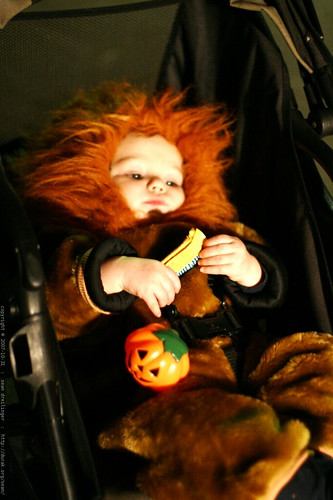 scary lion with flashlight and candy    MG 5736