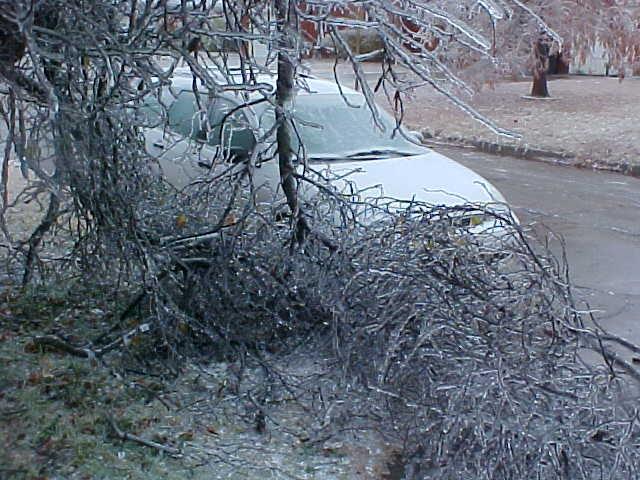 A Frozen Redbud Down