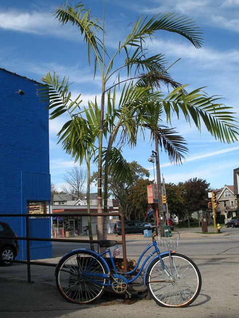 Bicycle and Palms
