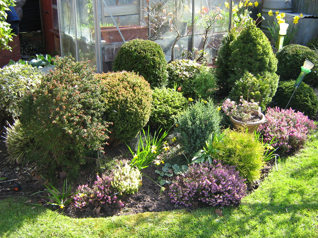 Dwarf conifers and heathers landscape shrubs trees for Landscaping shrubs