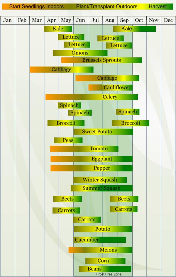 Zone 10 vegetable calendar search results calendar 2015 for Vegetable garden calendar