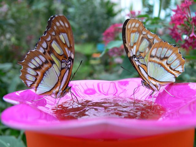 Mariposario de Benalmádena . Benalmadena Butterfly Park