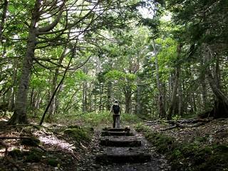 知床五湖步道