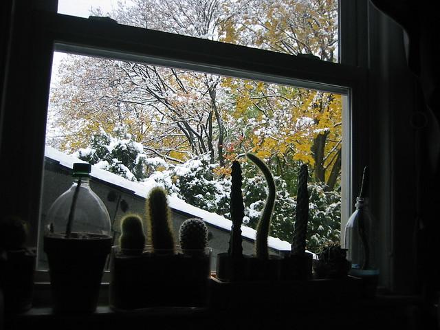 Snowing outside my bedroom window..