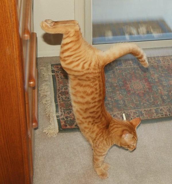 Freddie Sticks His Landing