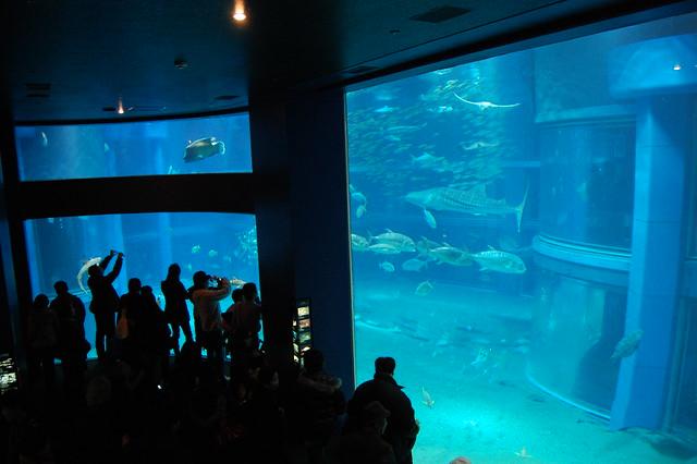 The Pacific Ocean water tank - Kaiyukan