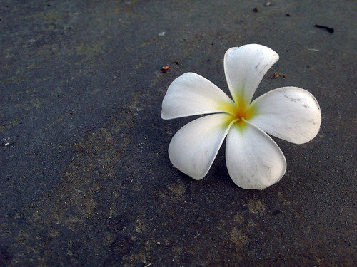 flower on the floor