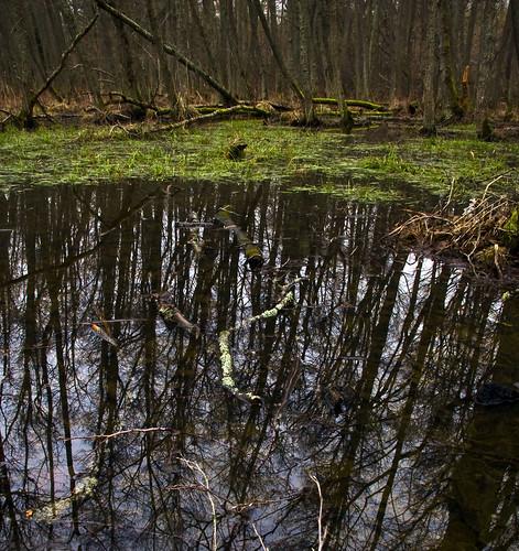 trees lake reflection water grass forest moss sweden logs sverige östergötland bråviken canonefs1785mmf456isusm johnbauer canoneos40d johanklovsjö djurön