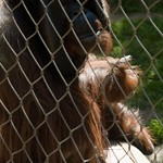 Los Angeles Zoo 073