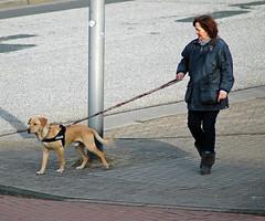 Sam in Cuxhaven