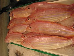 tilapia(0.0), forage fish(0.0), red snapper(0.0), red seabream(0.0), tilapia(0.0), milkfish(0.0), animal(1.0), fish(1.0), fish(1.0), seafood(1.0), oily fish(1.0), food(1.0),