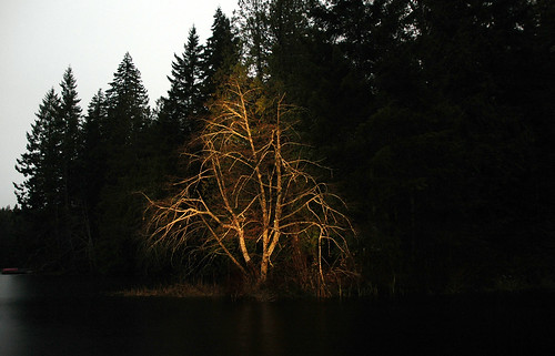 Light Painting - Tree
