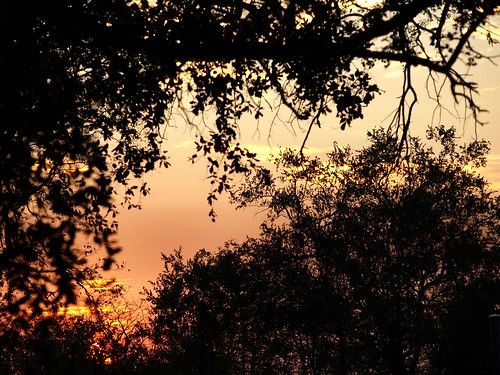 africa trees sky sun tree sol nature public alberi clouds sunrise landscape southafrica geotagged dawn soleil gate nuvole alba © himmel natura olympus ciel cielo afrika sole nuages albero sonne zuiko paesaggio rsa allrightsreserved krugernationalpark krugerpark kruger 2007 limpopo 0513 afrique cancelli southarica sudafrica áfrica paulkruger santostefano zd tancredi ©allrightsreserved flickrsbest krugernp 1442mm december2007 phalaborwa 26december2007 parcokruger e410 olympuse410 platinumheartaward georeferenziata