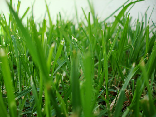 You may think these things are about as exciting as watching grass grow, but you'll want to learn these things if you want to keep growing.